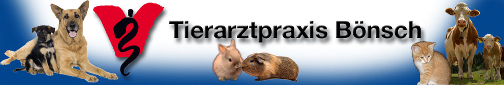 Tierarztpraxis B�nsch in Greiling  - Internistik & Labor